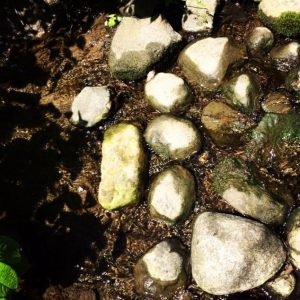 Example 3: Captured with my iPhone camera, this nature shot at Taltree Arboretum and Gardens uses sunlight to shine a different light on a rock bed.